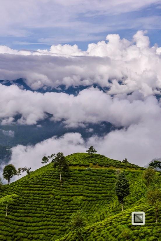 Darjeeling-27