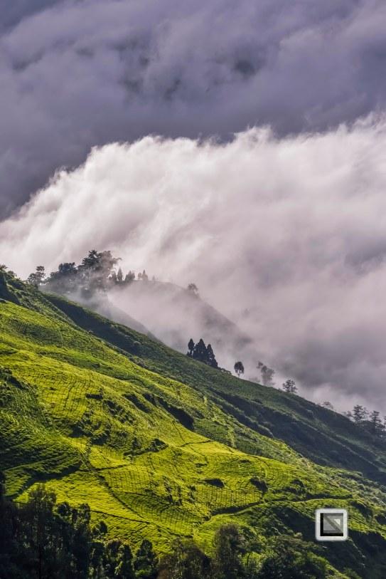 Darjeeling-8-2