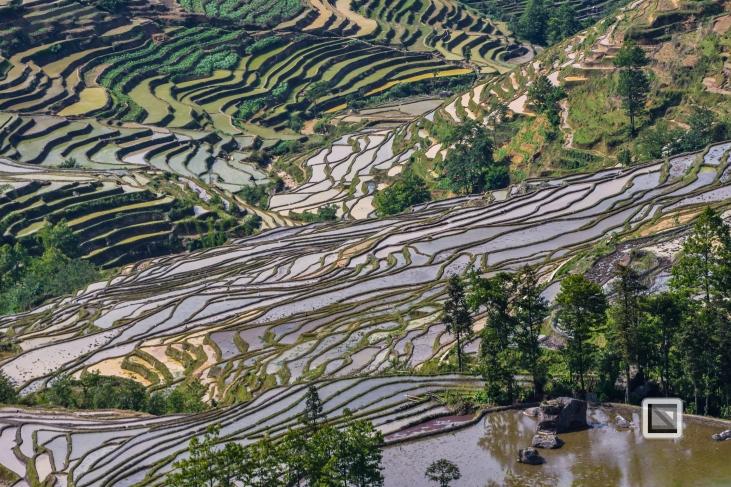 China - Yunnan - Yuanyang-17
