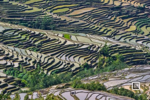 China - Yunnan - Yuanyang-18