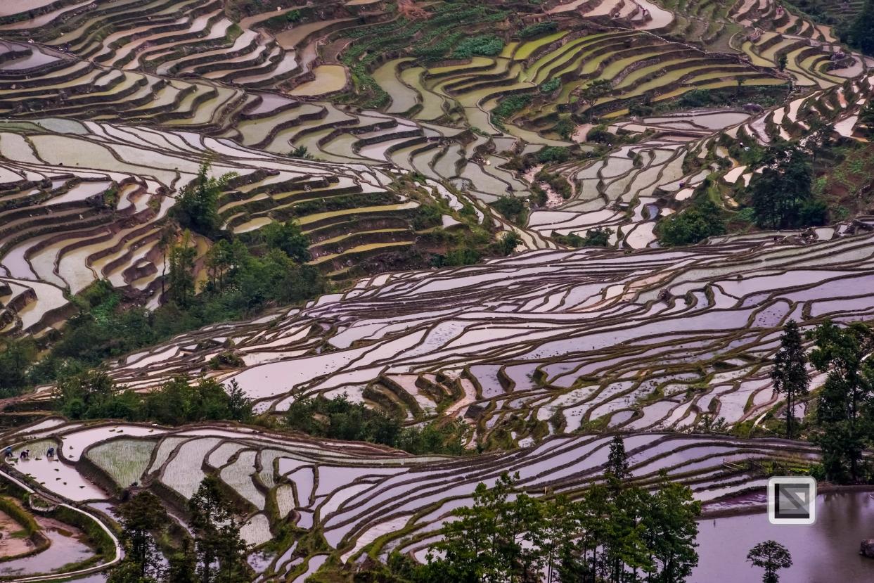 China - Yunnan - Yuanyang-52