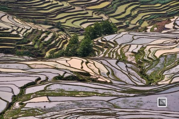 China - Yunnan - Yuanyang-54