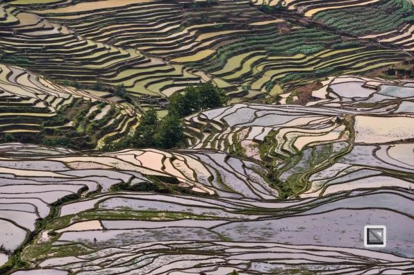 China - Yunnan - Yuanyang-55