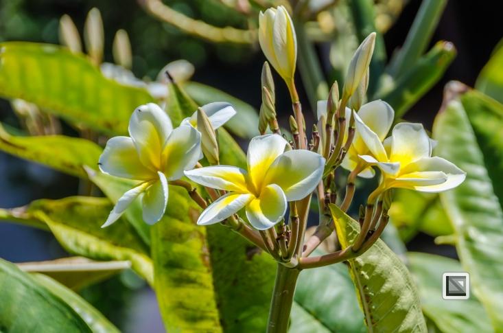 Hawaii Maui-34