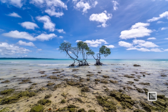 India - Andaman Islands - Havelock-12