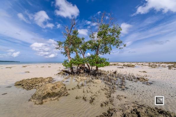 India - Andaman Islands - Havelock-2