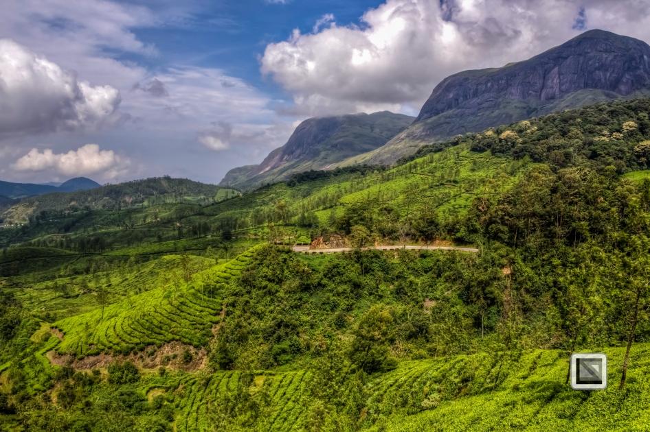 India - Kerala - Munnar-10