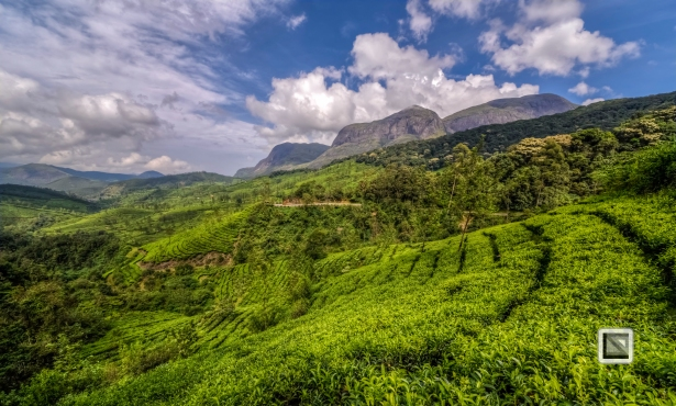 India - Kerala - Munnar-12