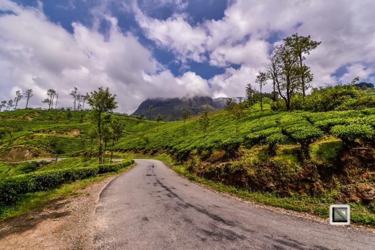 India - Kerala - Munnar-14