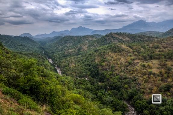 India - Kerala - Munnar-5