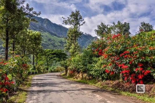 India - Kerala - Munnar-6