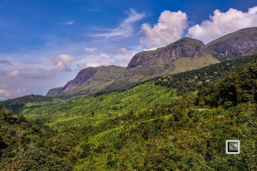 India - Kerala - Munnar-9