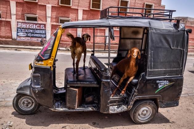 India - Rajasthan - Bikaner-6