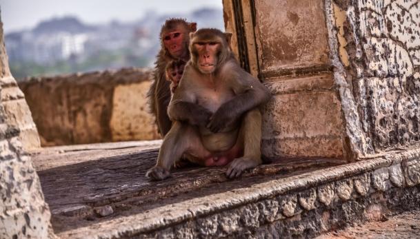 India - Rajasthan - Jaipur-22
