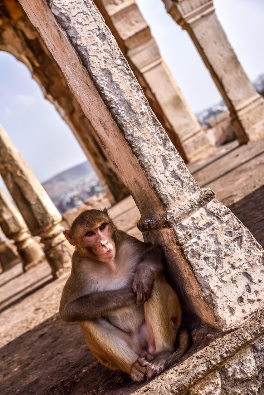 India - Rajasthan - Jaipur-24
