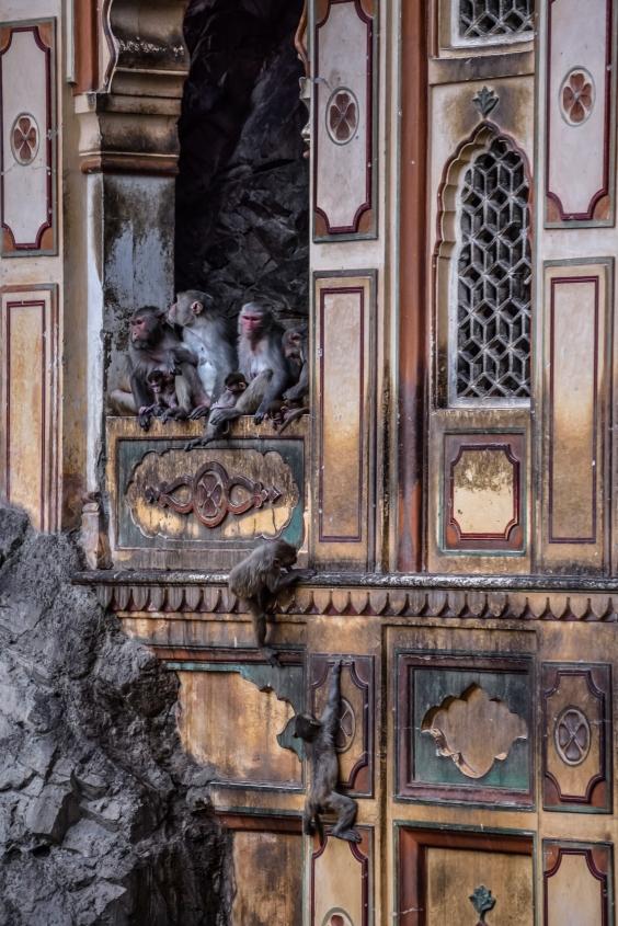 India - Rajasthan - Jaipur-26