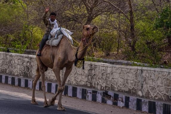 India - Rajasthan - Jaipur-5