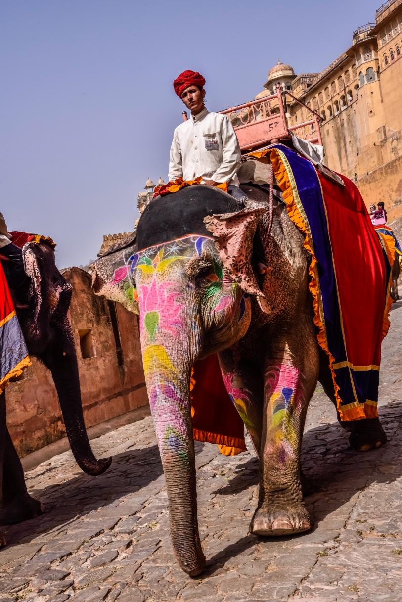 India - Rajasthan - Jaipur-9