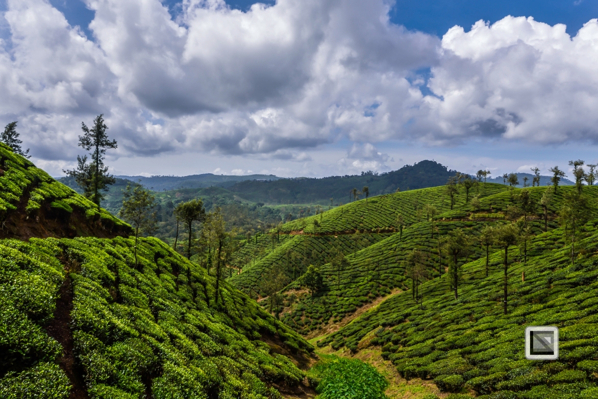 India - Tamil Nadu - Valparai-14