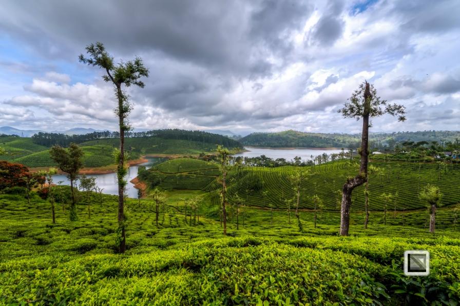 India - Tamil Nadu - Valparai-15