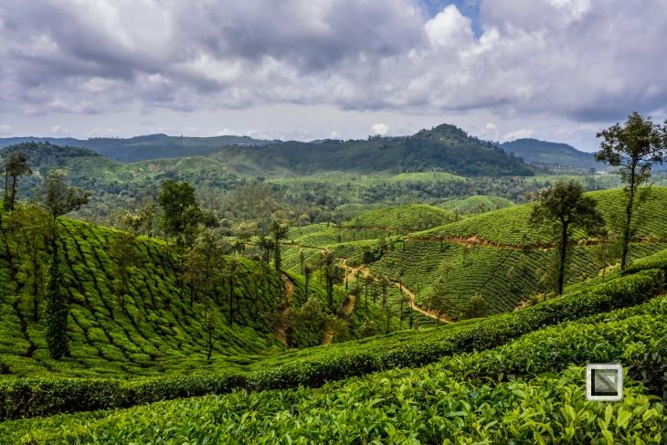 India - Tamil Nadu - Valparai-3
