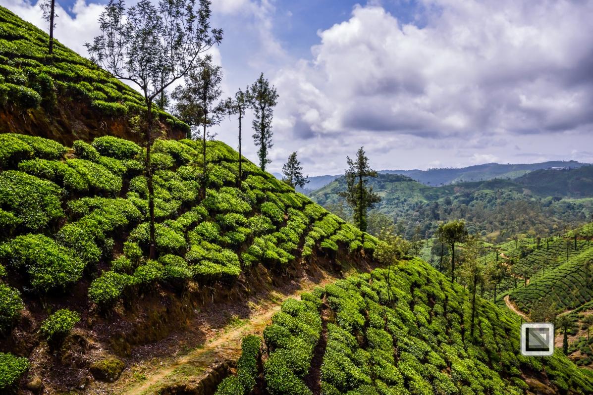 India - Tamil Nadu - Valparai-7