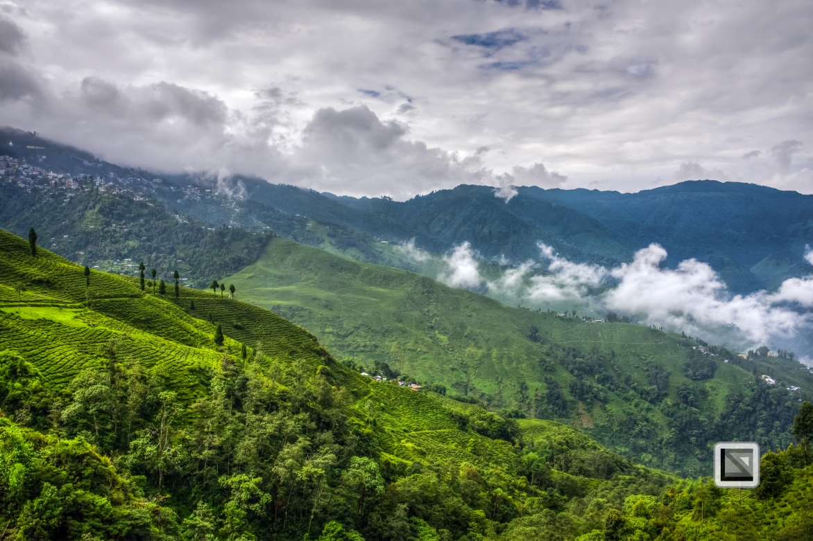 India - West Begal - Darjeeling-10