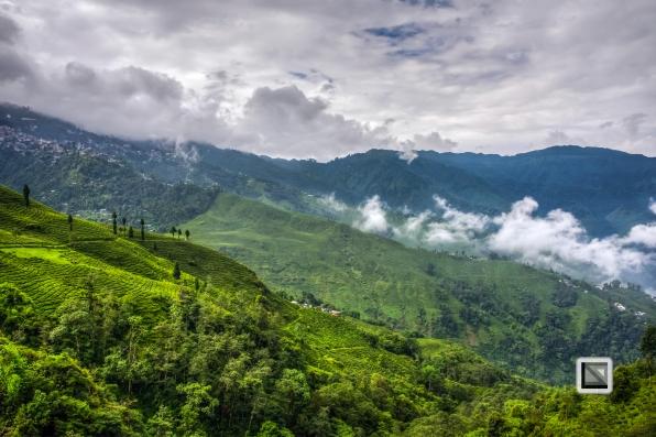 India - West Begal - Darjeeling-10
