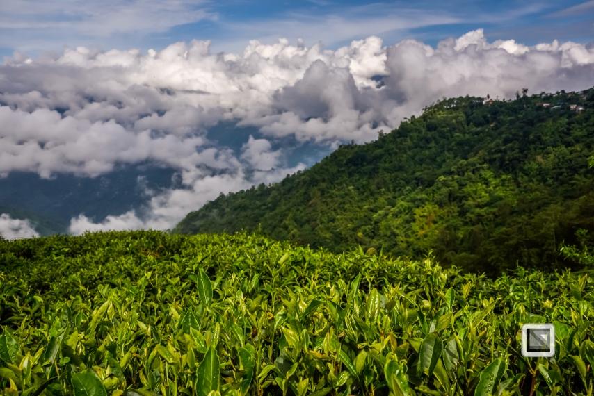 India - West Begal - Darjeeling-11
