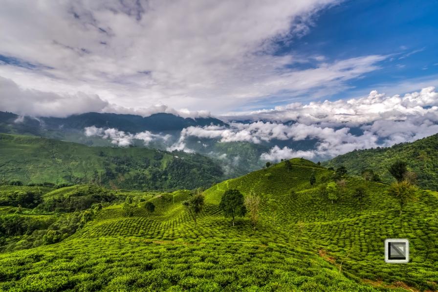 India - West Begal - Darjeeling-13