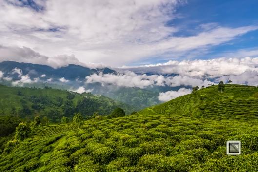 India - West Begal - Darjeeling-15