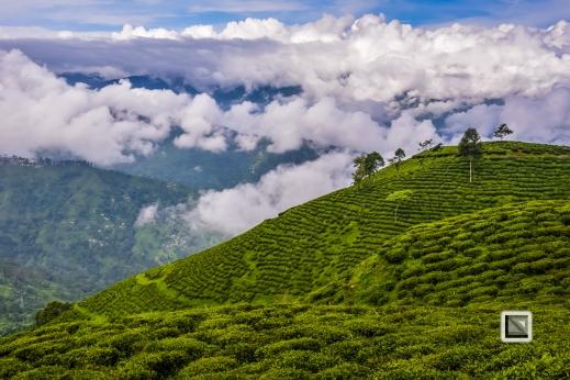 India - West Begal - Darjeeling-16