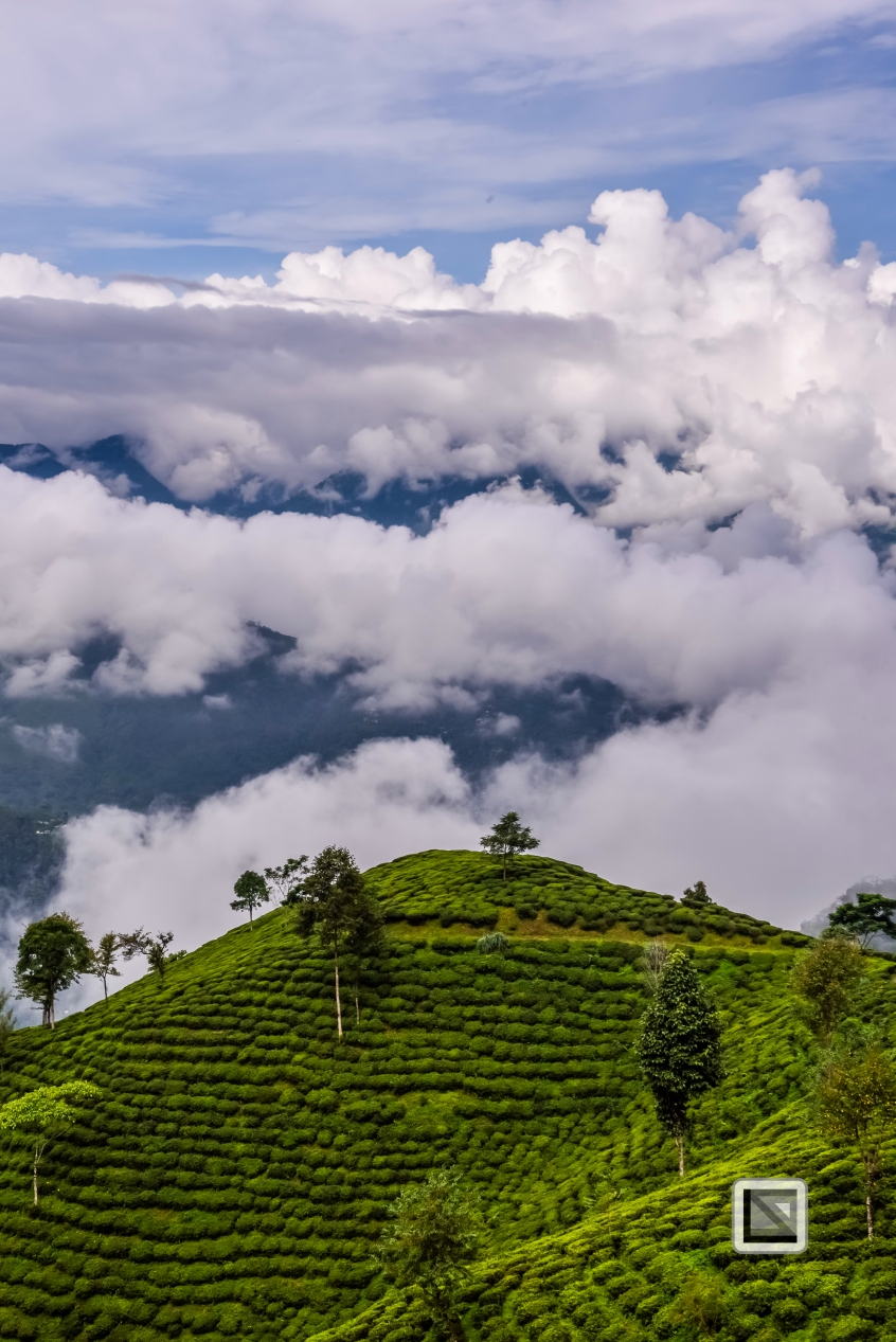 India - West Begal - Darjeeling-17