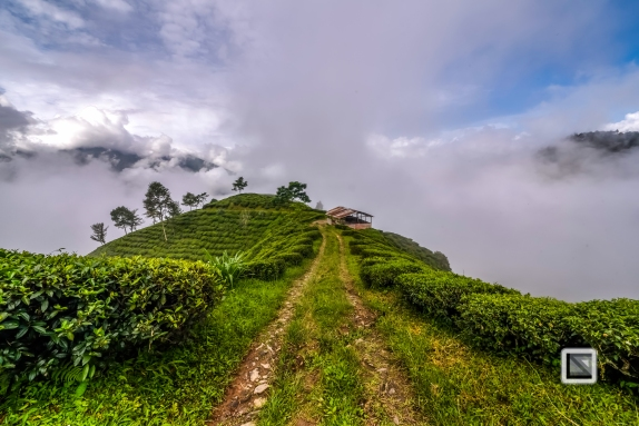 India - West Begal - Darjeeling-19