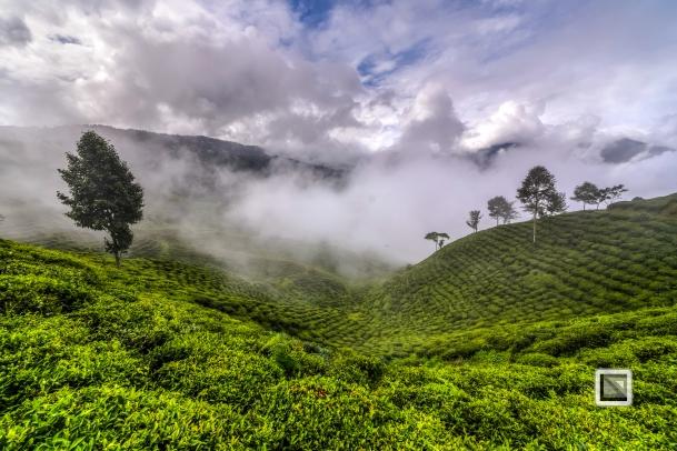 India - West Begal - Darjeeling-21