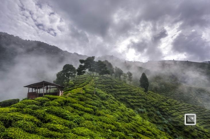 India - West Begal - Darjeeling-22
