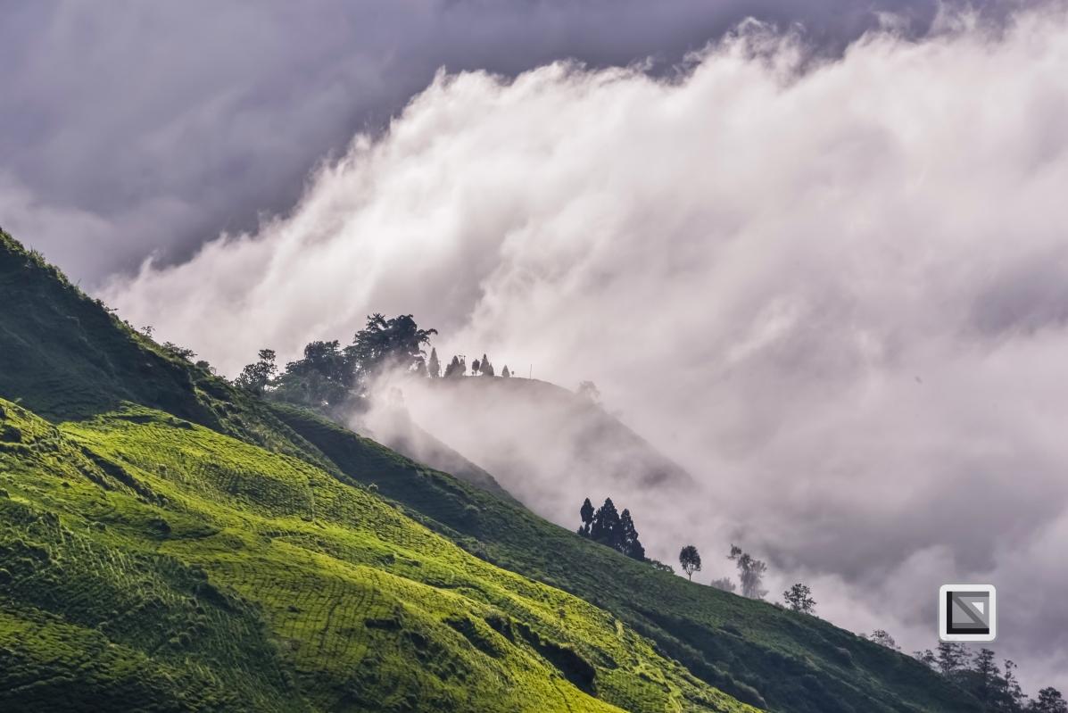 India - West Begal - Darjeeling-28