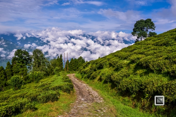 India - West Begal - Darjeeling-5