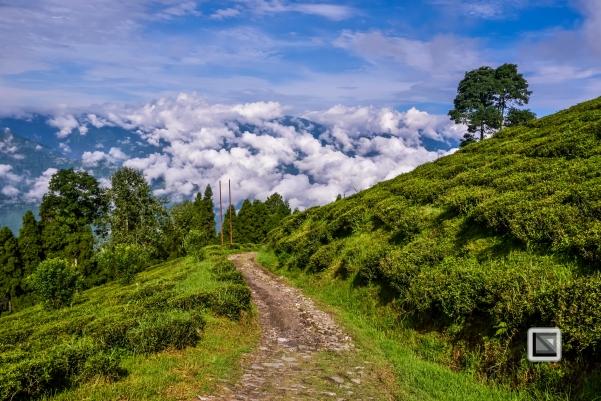 India - West Begal - Darjeeling-5