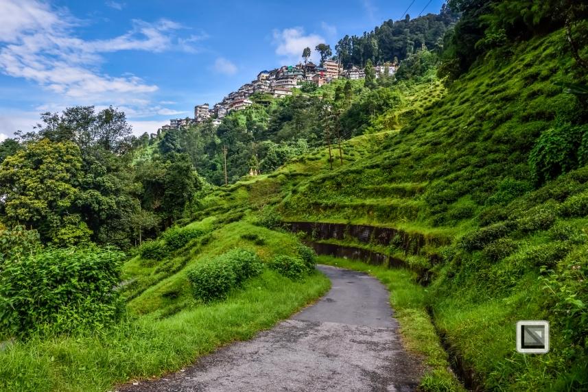 India - West Begal - Darjeeling-8