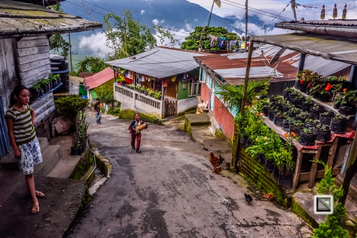 India - West Begal - Darjeeling-9
