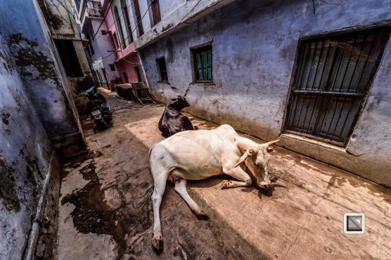 India - West Bengal - Varanasi-67