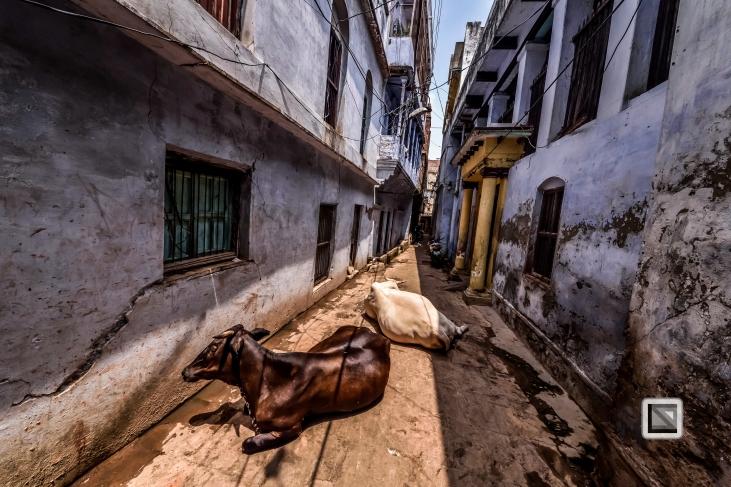 India - West Bengal - Varanasi-68