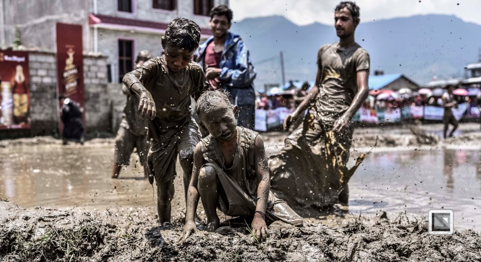 Pokhara paddy planting festival-15
