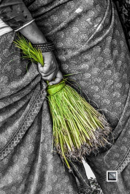 Pokhara paddy planting festival-63