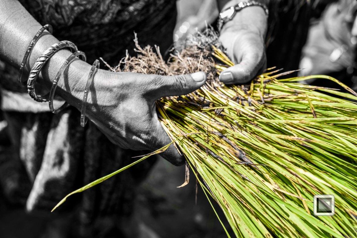 Pokhara paddy planting festival-85
