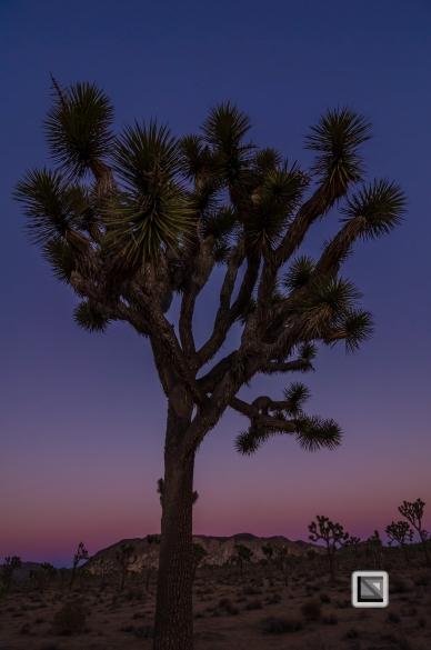 USA - California - Joshua national park-10