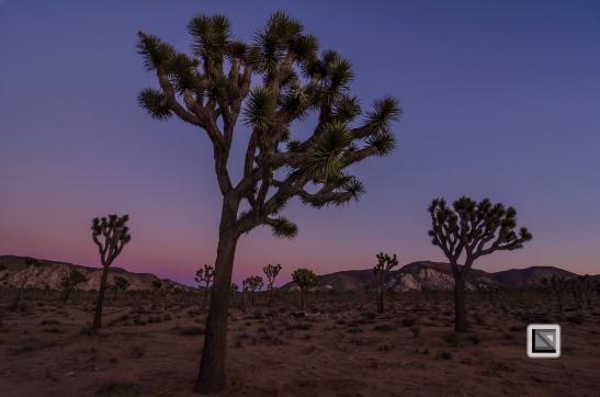 USA - California - Joshua national park-11