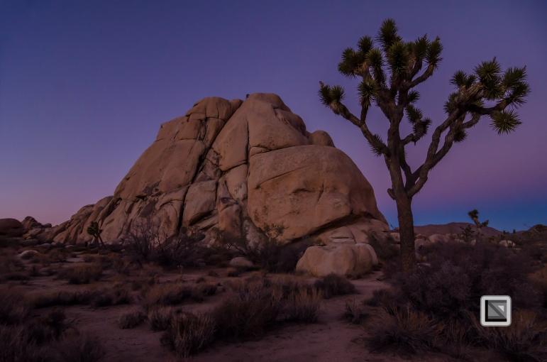 USA - California - Joshua national park-13