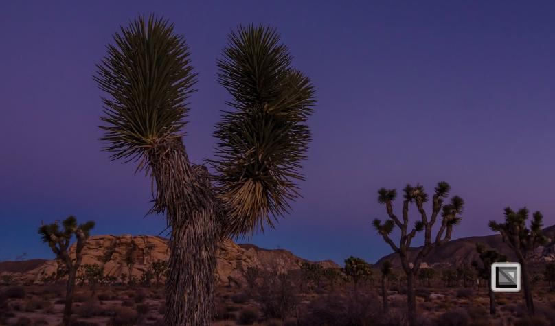 USA - California - Joshua national park-15
